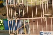 House for Breeding and Nature of Thai Cats (写真を撮っていたら起きてきました)