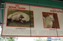 House for Breeding and Nature of Thai Cats (アメリカの大手ペットフードメーカー Royal Caninもサポート)