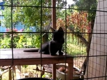 House for Breeding and Nature of Thai Cats(ダムプロード:00:00)