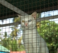 House for Breeding and Nature of Thai Cats
